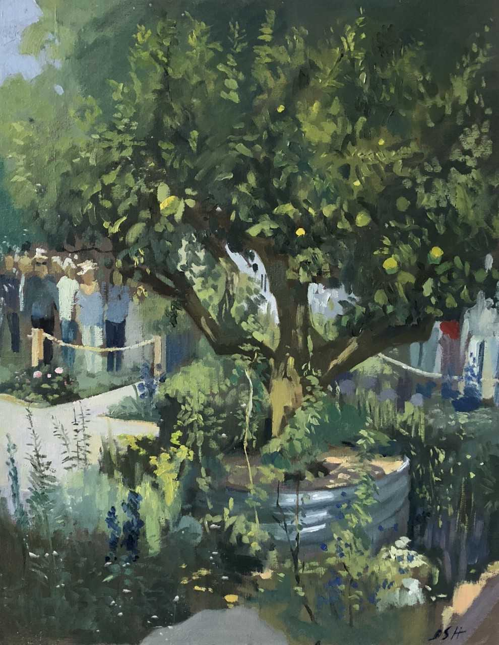 Chelsea Flower show, the Lemon Tree Garden